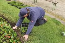 Jubilaeumsbepflanzung_2021_09